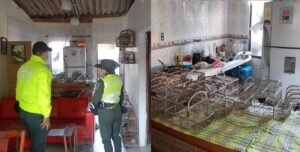 Capturan en Villa Las Moras a mujer que tenía 48 aves silvestres en su casa